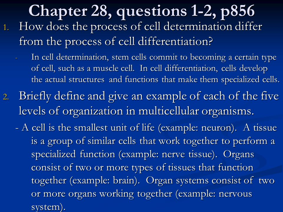 Chapter 28, questions 1-2, p856 1. How does the process of cell determination differ from the process of cell differentiation? - In cell determination