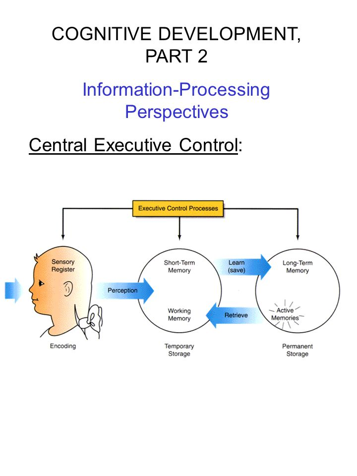 COGNITIVE DEVELOPMENT, PART 2 Information-Processing Perspectives Central Executive Control: