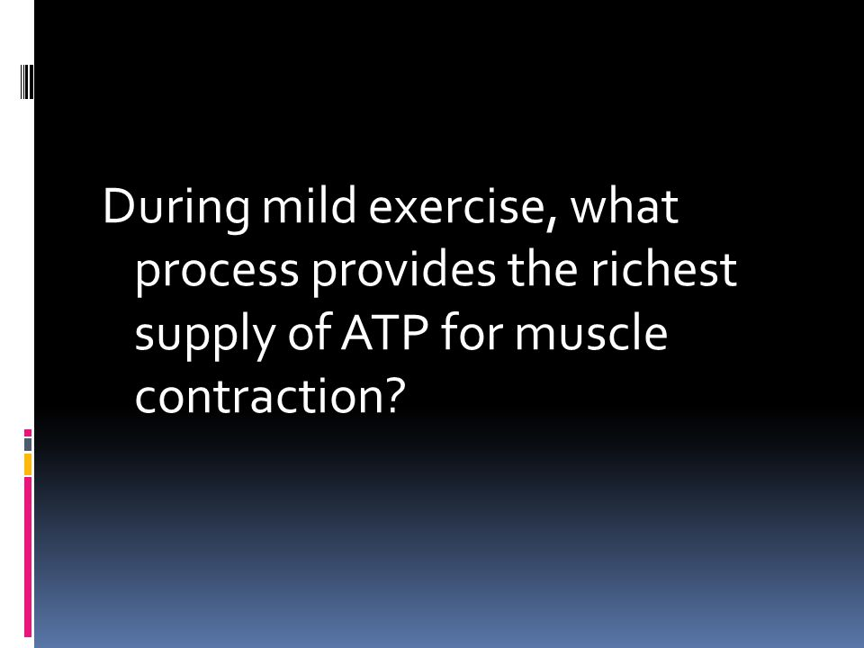 During mild exercise, what process provides the richest supply of ATP for muscle contraction?