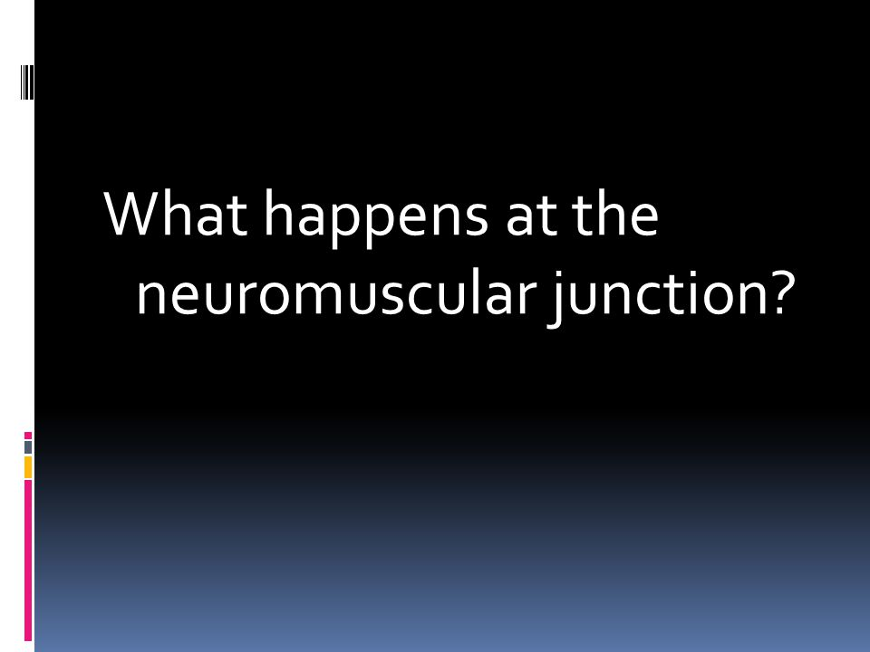 What happens at the neuromuscular junction?