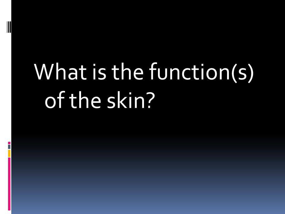 What is the function(s) of the skin?