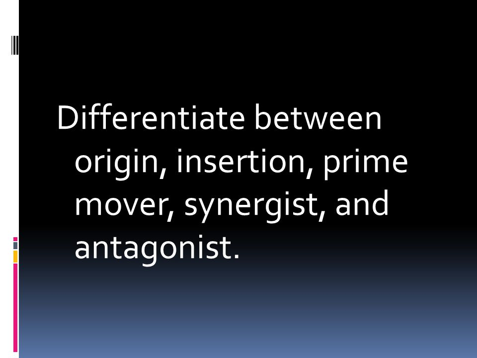 Differentiate between origin, insertion, prime mover, synergist, and antagonist.