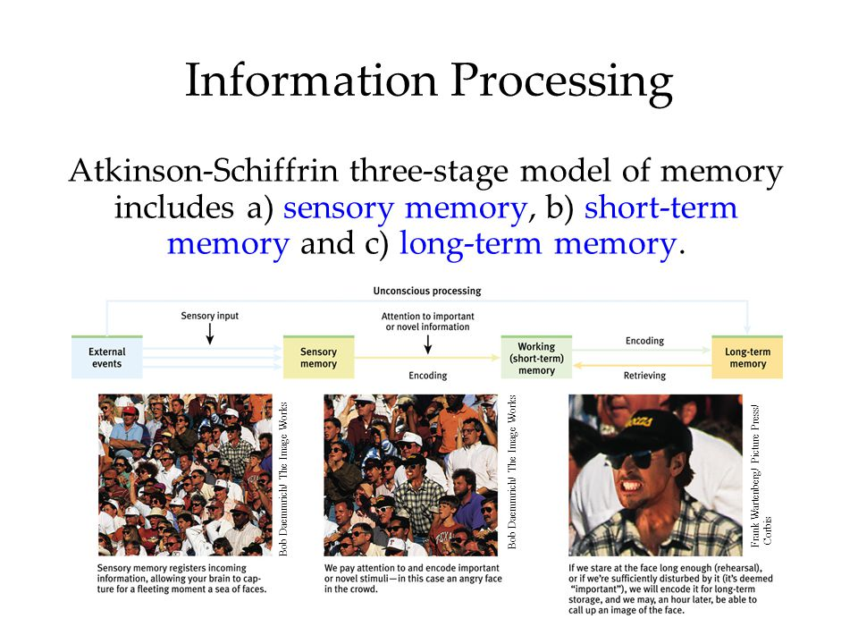 Information Processing Atkinson-Schiffrin three-stage model of memory includes a) sensory memory, b) short-term memory and c) long-term memory. Bob Da