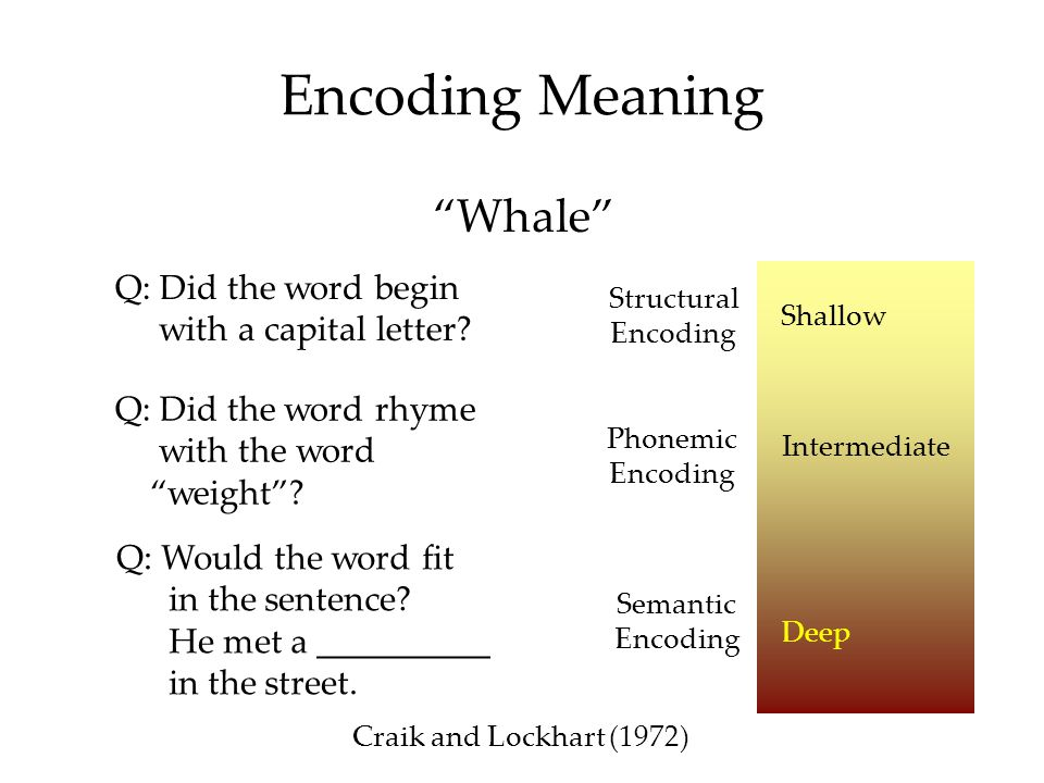 "Encoding Meaning Q: Did the word begin with a capital letter? Structural Encoding Q: Did the word rhyme with the word ""weight""? Q: Would the word fit"
