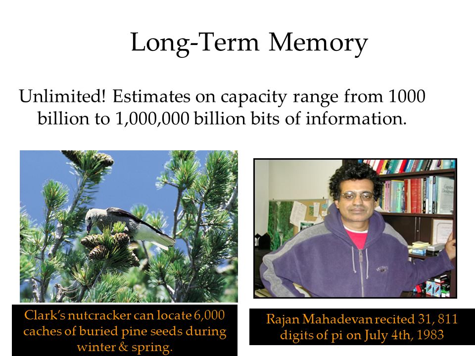 Long-Term Memory Unlimited! Estimates on capacity range from 1000 billion to 1,000,000 billion bits of information. Clark's nutcracker can locate 6,00