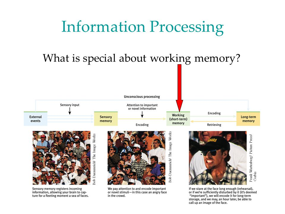 Working Memory Store What happens if you need to keep information in working memory longer than 30 seconds.