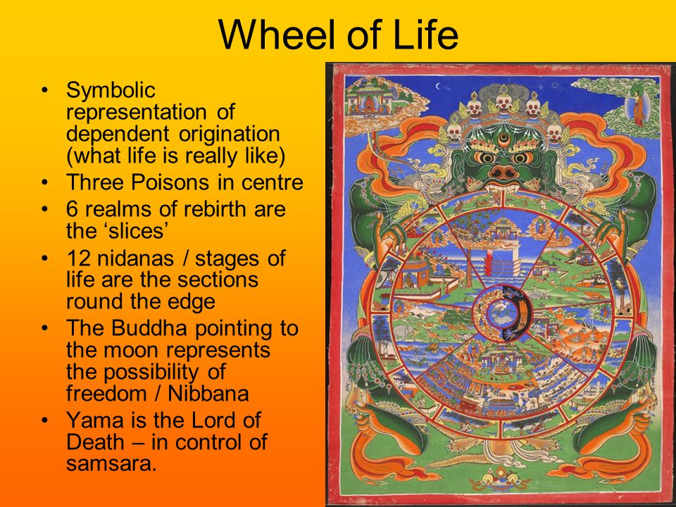 Wheel of Life Symbolic representation of dependent origination (what life is really like) Three Poisons in centre 6 realms of rebirth are the 'slices' 12 nidanas / stages of life are the sections round the edge The Buddha pointing to the moon represents the possibility of freedom / Nibbana Yama is the Lord of Death – in control of samsara.