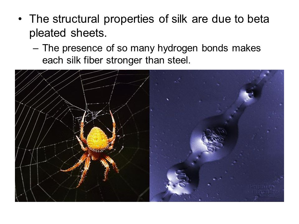 The structural properties of silk are due to beta pleated sheets. –The presence of so many hydrogen bonds makes each silk fiber stronger than steel.