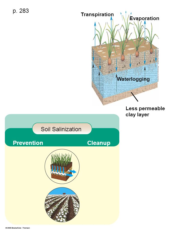 Transpiration Evaporation Waterlogging Less permeable clay layer Soil Salinization Prevention Cleanup p. 283