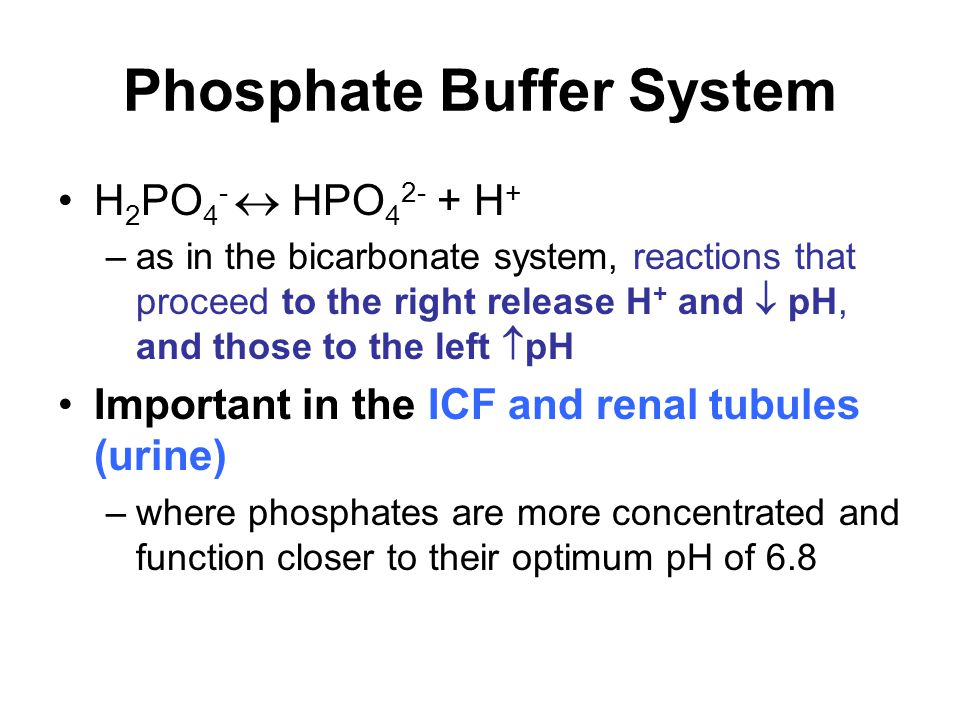Phosphate Buffer System H 2 PO 4 -  HPO 4 2- + H + –as in the bicarbonate system, reactions that proceed to the right release H + and  pH, and those to the left  pH Important in the ICF and renal tubules (urine) –where phosphates are more concentrated and function closer to their optimum pH of 6.8