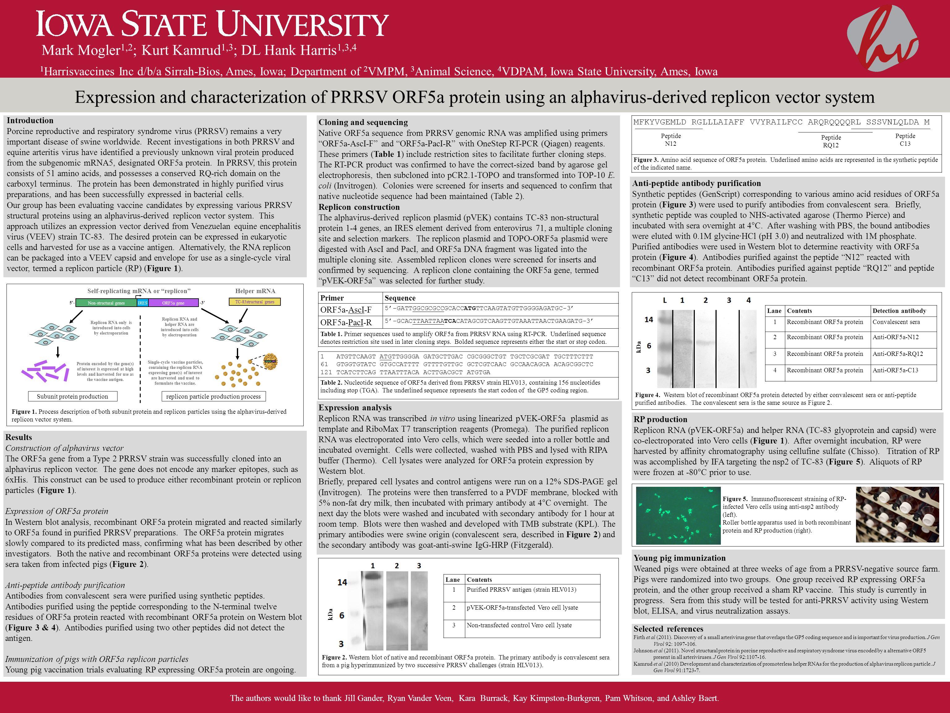 Expression and characterization of PRRSV ORF5a protein using an alphavirus-derived replicon vector system Mark Mogler 1,2 ; Kurt Kamrud 1,3 ; DL Hank Harris 1,3,4 The authors would like to thank Jill Gander, Ryan Vander Veen, Kara Burrack, Kay Kimpston-Burkgren, Pam Whitson, and Ashley Baert.