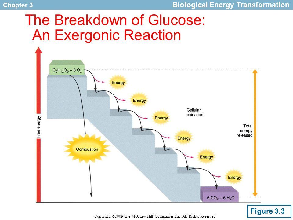 Chapter 3 Copyright ©2009 The McGraw-Hill Companies, Inc. All Rights Reserved. The Breakdown of Glucose: An Exergonic Reaction Figure 3.3 Biological E