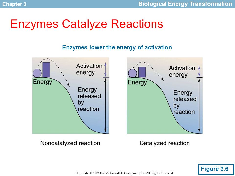 Chapter 3 Copyright ©2009 The McGraw-Hill Companies, Inc. All Rights Reserved. Enzymes Catalyze Reactions Biological Energy Transformation Figure 3.6