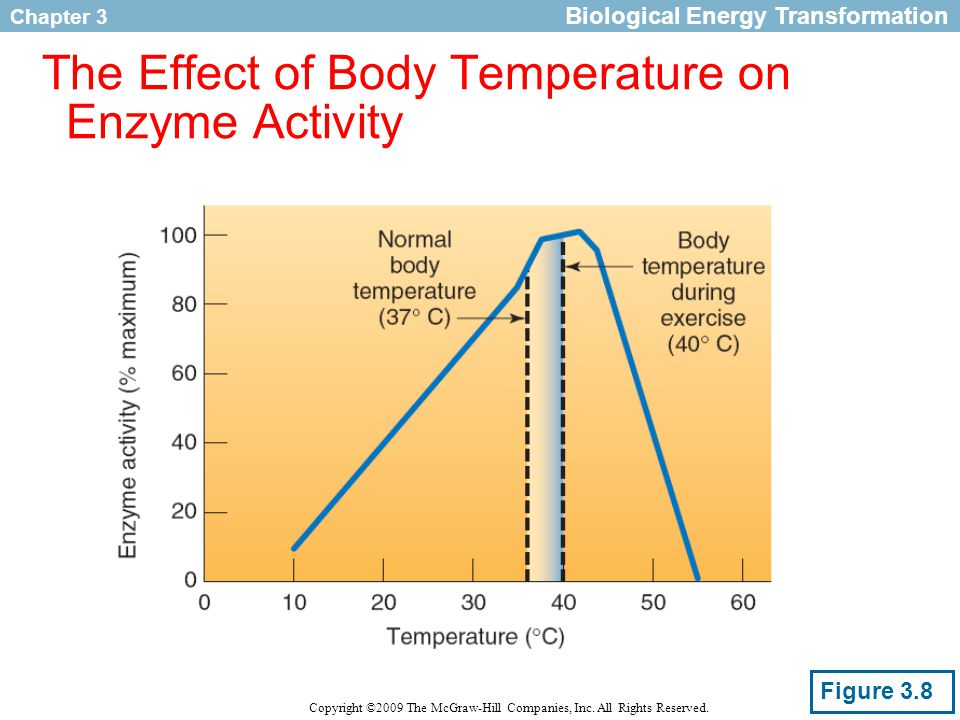 Chapter 3 Copyright ©2009 The McGraw-Hill Companies, Inc. All Rights Reserved. The Effect of Body Temperature on Enzyme Activity Biological Energy Tra