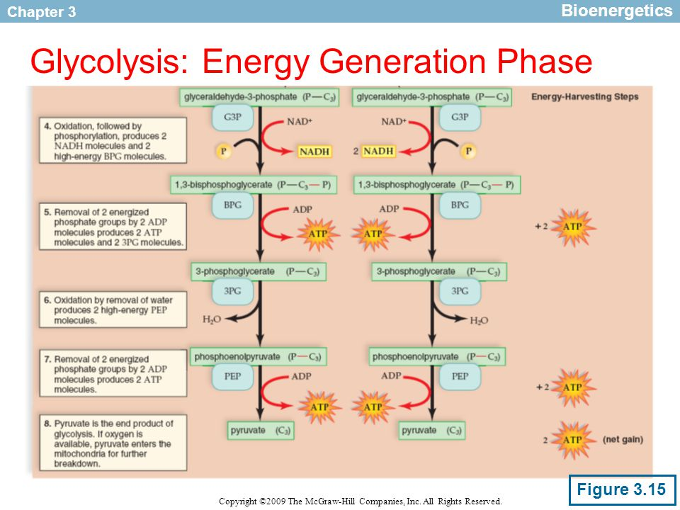 Chapter 3 Copyright ©2009 The McGraw-Hill Companies, Inc. All Rights Reserved. Glycolysis: Energy Generation Phase Bioenergetics Figure 3.15