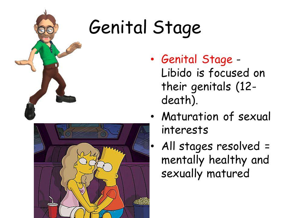 Genital Stage Genital Stage - Libido is focused on their genitals (12- death).