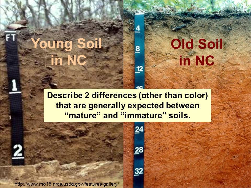 Young Soil in NC Old Soil in NC http://www.mo15.nrcs.usda.gov/features/gallery/ Describe 2 differences (other than color) that are generally expected between mature and immature soils.