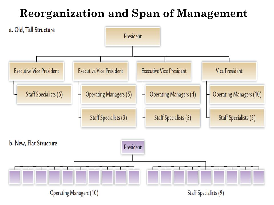 Reorganization and Span of Management