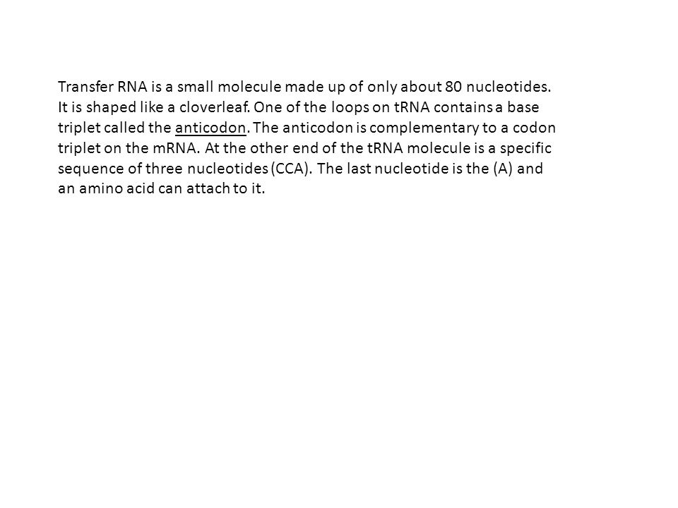 Transfer RNA is a small molecule made up of only about 80 nucleotides.