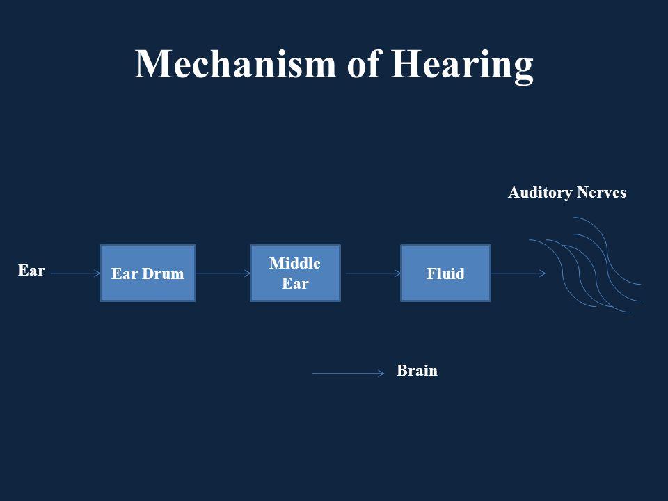 Mechanism of Hearing Ear Drum Middle Ear Fluid Auditory Nerves Brain Ear