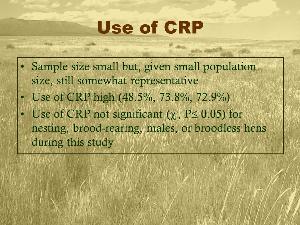 Use of CRP Sample size small but, given small population size, still somewhat representative Use of CRP high (48.5%, 73.8%, 72.9%) Use of CRP not significant ( χ 2, P  0.05) for nesting, brood-rearing, males, or broodless hens during this study