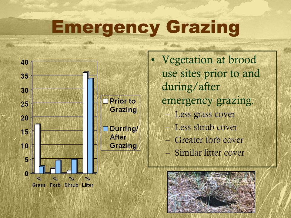 Emergency Grazing Vegetation at brood use sites prior to and during/after emergency grazing.