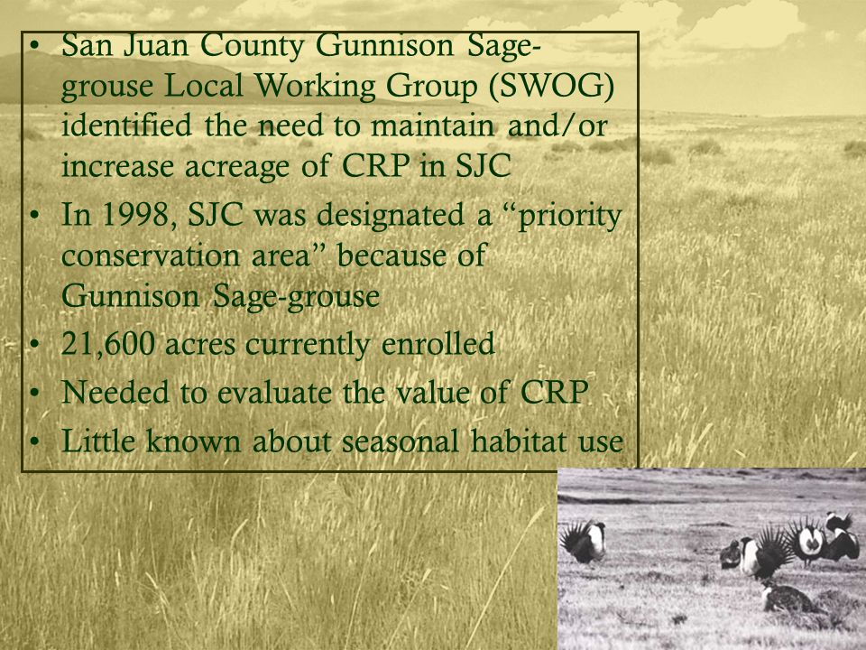 San Juan County Gunnison Sage- grouse Local Working Group (SWOG) identified the need to maintain and/or increase acreage of CRP in SJC In 1998, SJC was designated a priority conservation area because of Gunnison Sage-grouse 21,600 acres currently enrolled Needed to evaluate the value of CRP Little known about seasonal habitat use