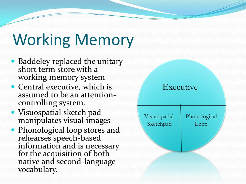 Postulation about short term and sensory memory Memory systems are functionally separate Attention is limited Process are controlled and automatic Aut