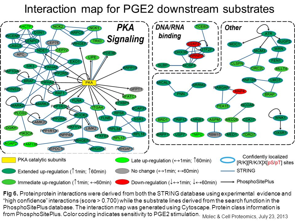 Interaction map for PGE2 downstream substrates Fig 6.