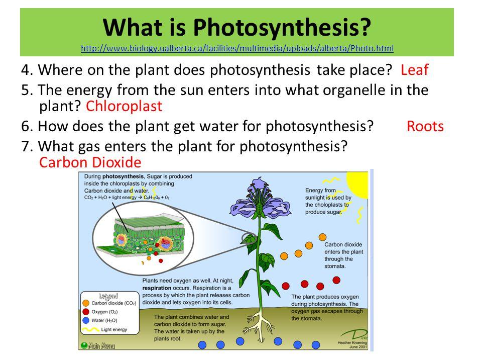 What is Photosynthesis? http://www.biology.ualberta.ca/facilities/multimedia/uploads/alberta/Photo.html http://www.biology.ualberta.ca/facilities/mult