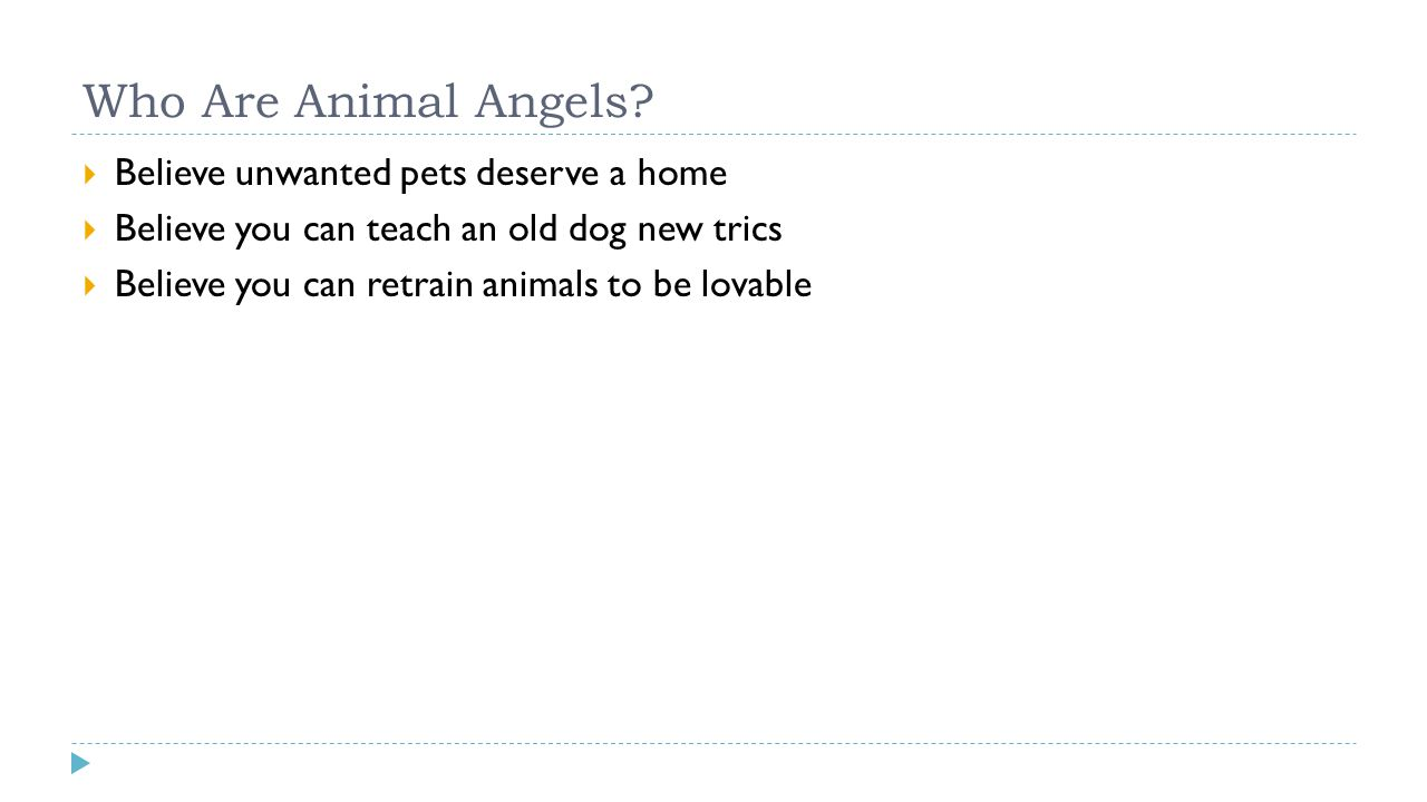 Who Are Animal Angels?  Believe unwanted pets deserve a home  Believe you can teach an old dog new trics  Believe you can retrain animals to be lov