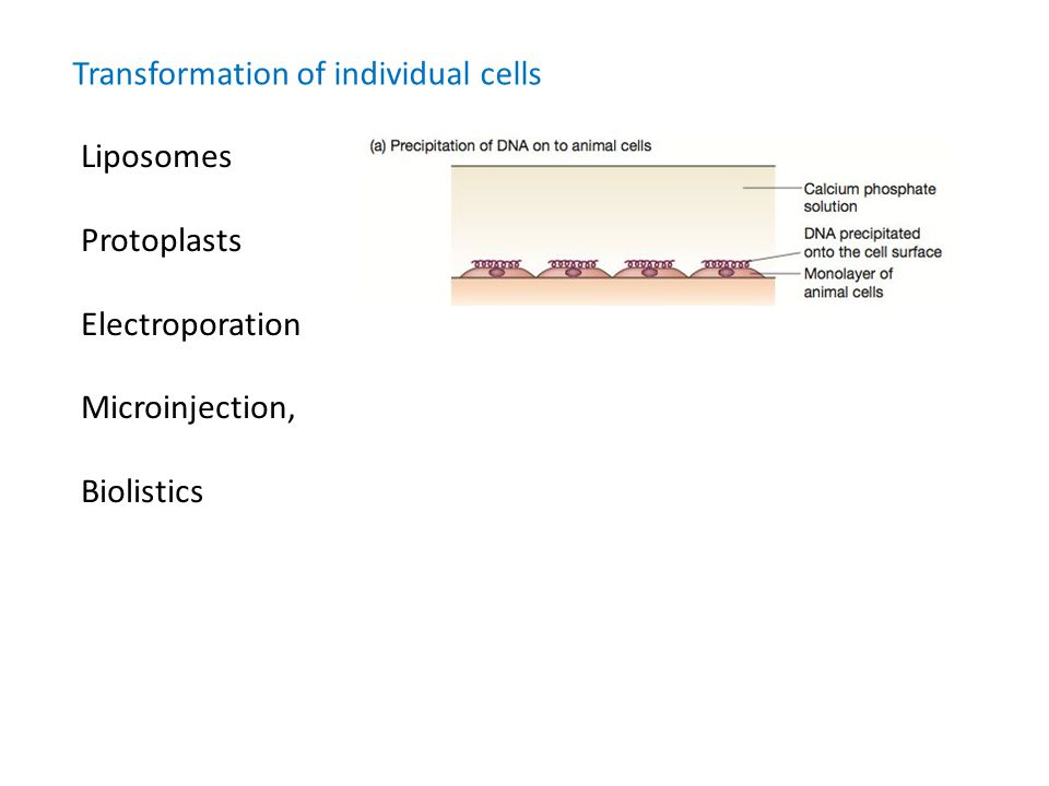 Transformation of individual cells Liposomes Protoplasts Electroporation Microinjection, Biolistics