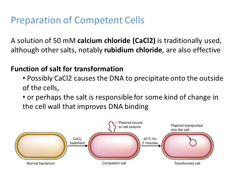 Preparation of Competent Cells A solution of 50 mM calcium chloride (CaCl2) is traditionally used, although other salts, notably rubidium chloride, ar