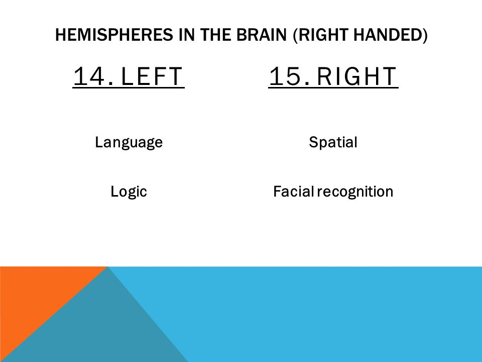 HEMISPHERES IN THE BRAIN (RIGHT HANDED) 14.LEFT Language Logic 15.RIGHT Spatial Facial recognition
