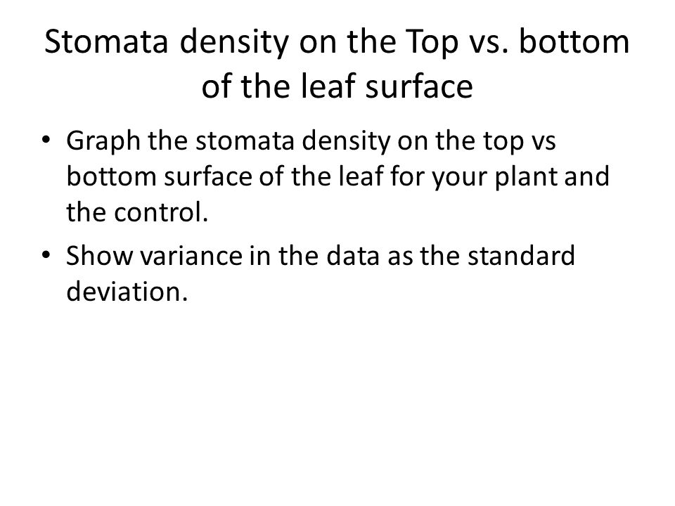 Stomata density on the Top vs.