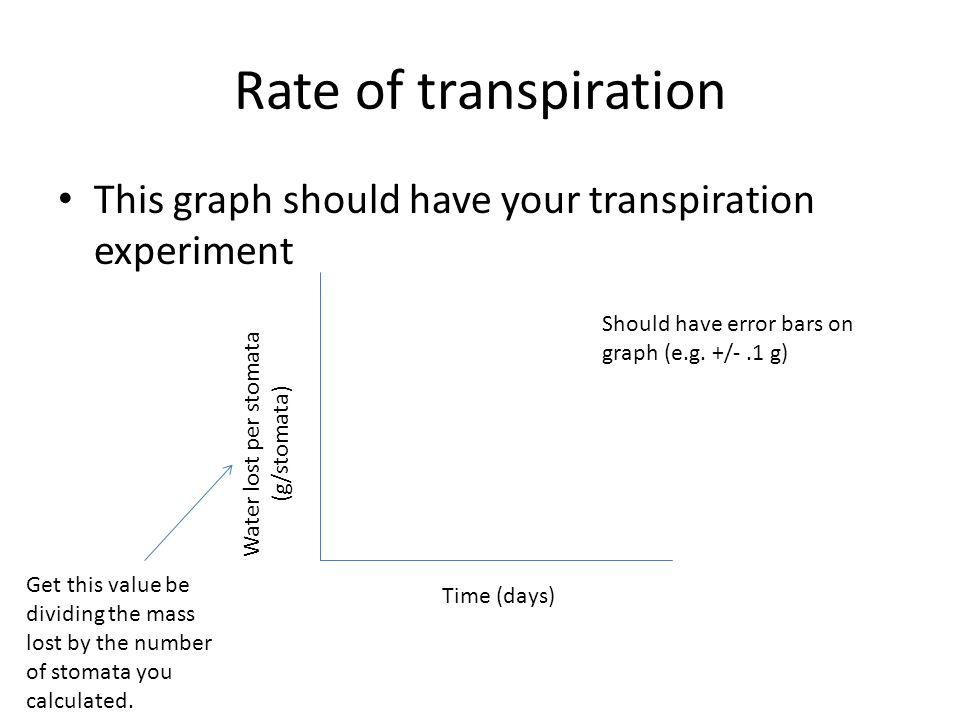 Rate of transpiration This graph should have your transpiration experiment Time (days) Water lost per stomata (g/stomata) Get this value be dividing the mass lost by the number of stomata you calculated.
