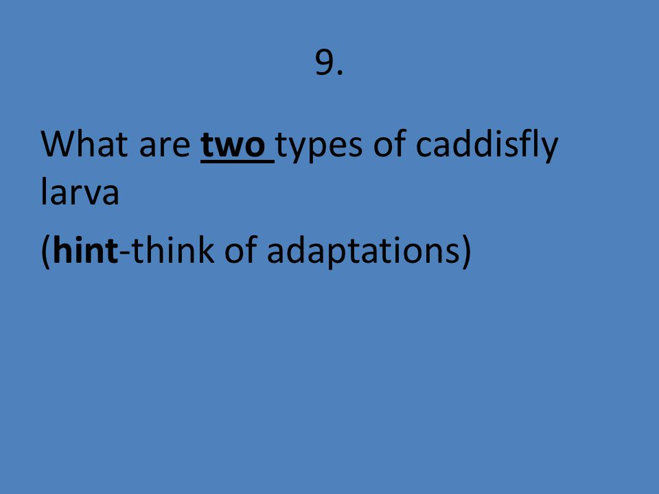 9. What are two types of caddisfly larva (hint-think of adaptations)