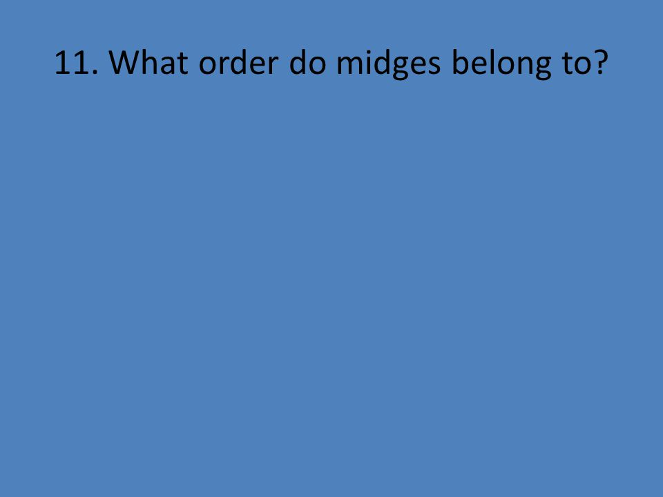 11. What order do midges belong to?