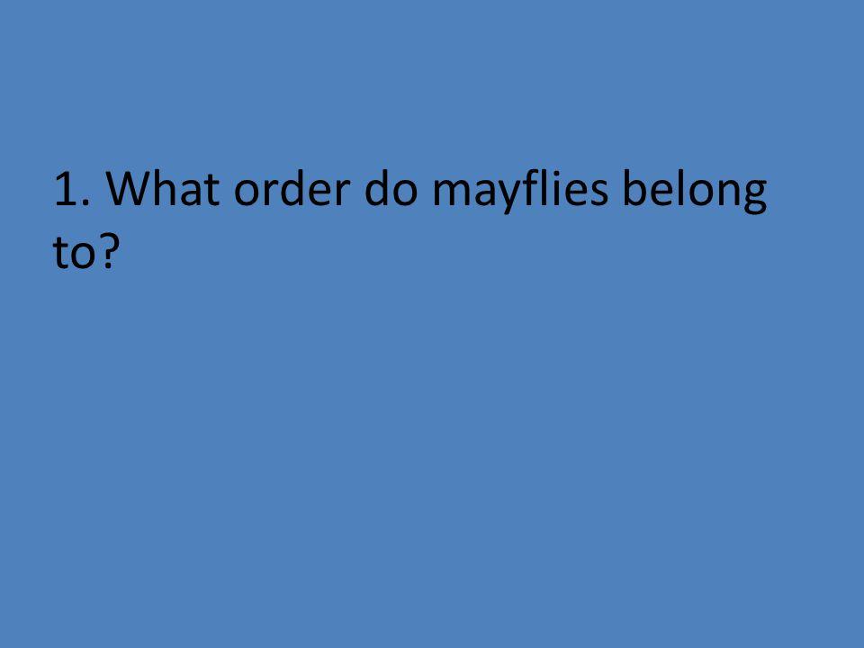 11. What order do midges belong to?