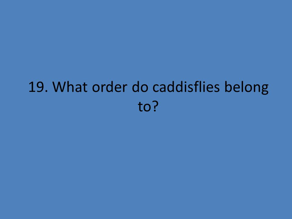 19. What order do caddisflies belong to