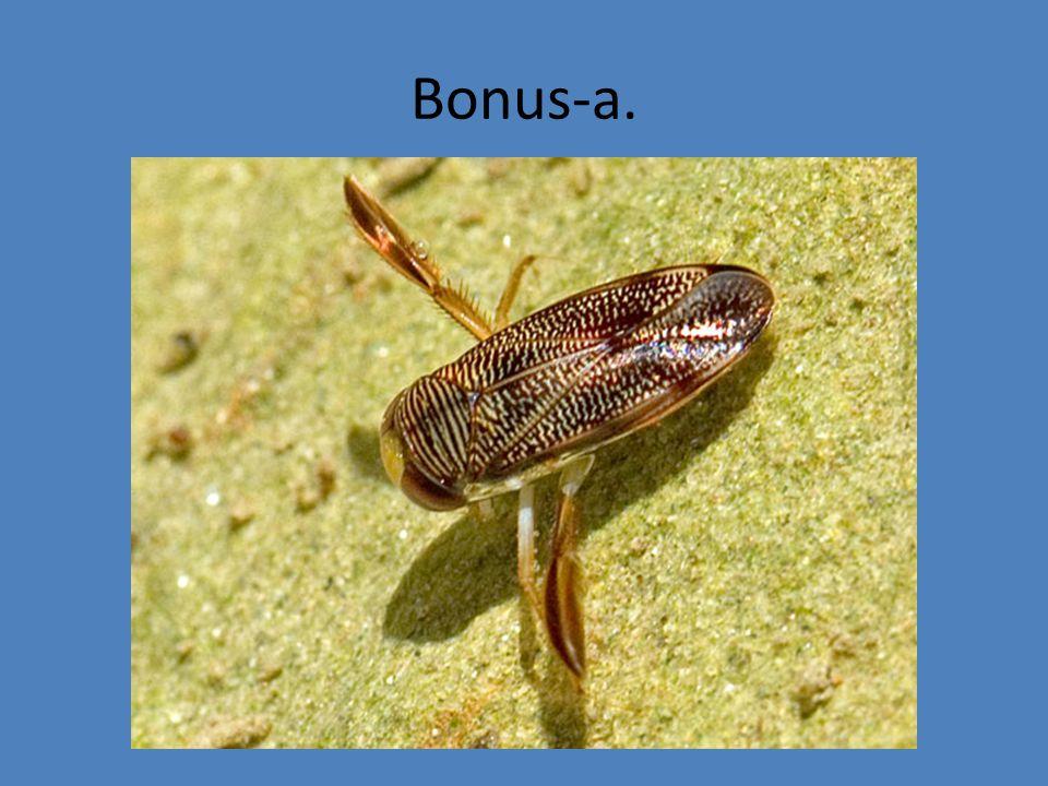 Bonus-a.