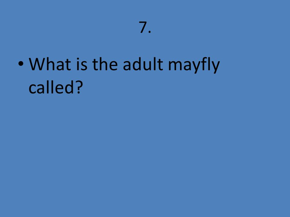 7. What is the adult mayfly called?