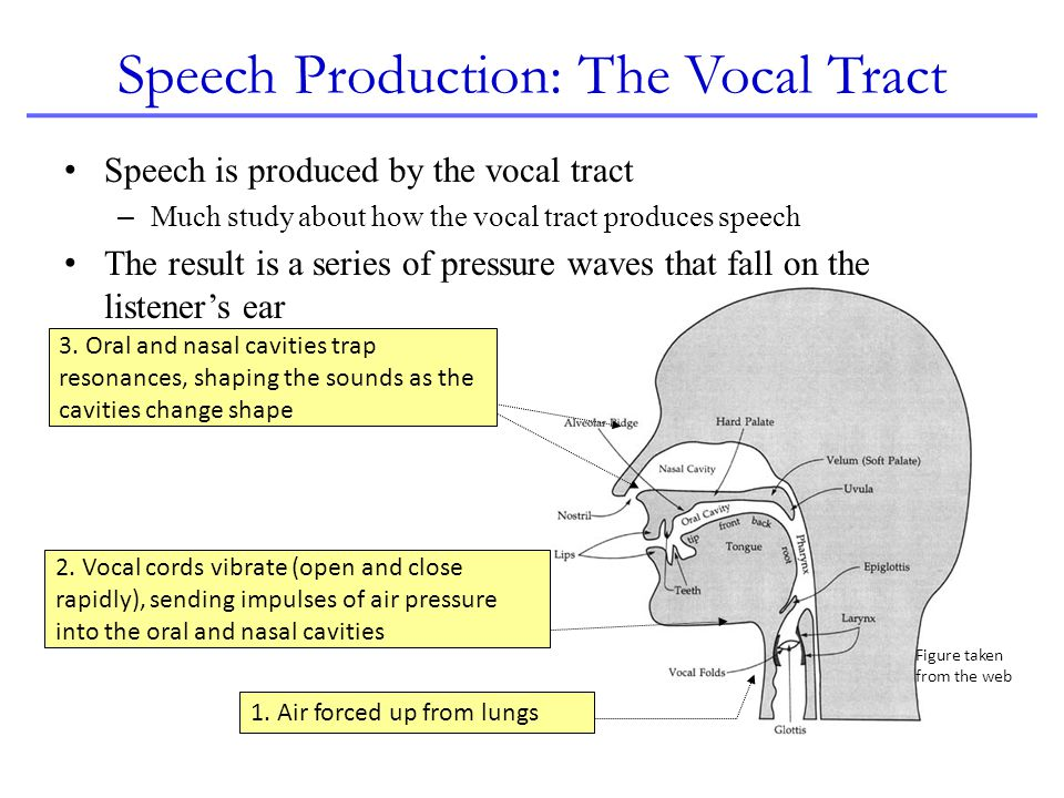 Speech Production: The Vocal Tract Speech is produced by the vocal tract – Much study about how the vocal tract produces speech The result is a series