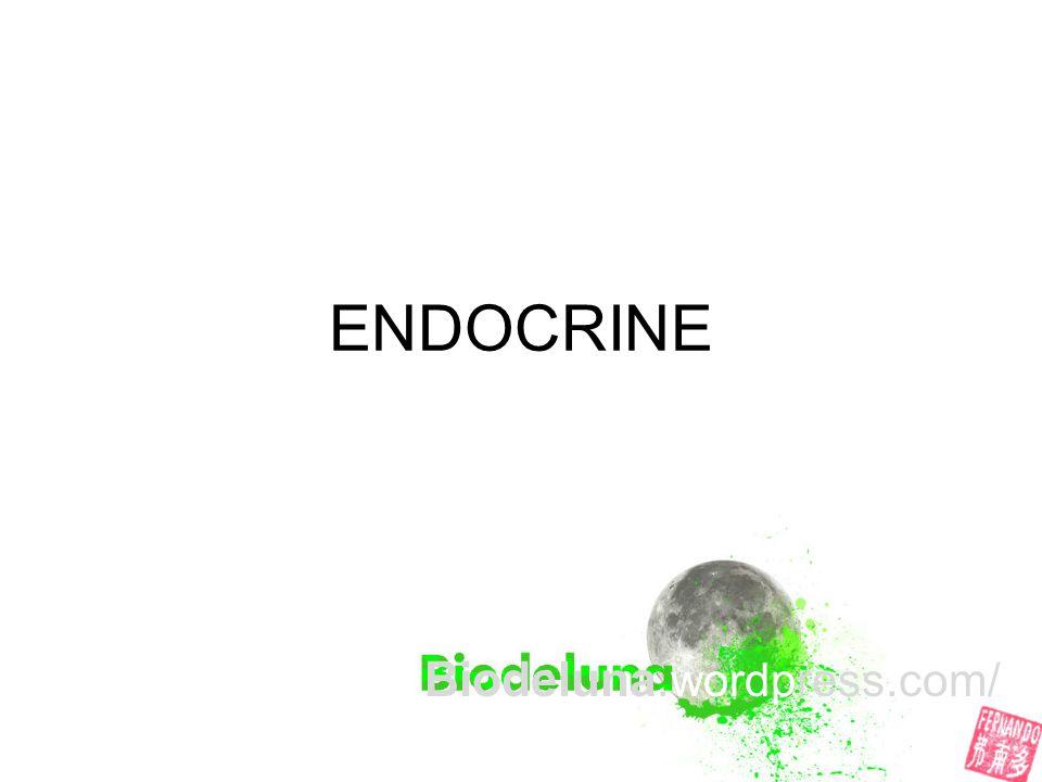 ENDOCRINE Biodeluna.wordpress.com/