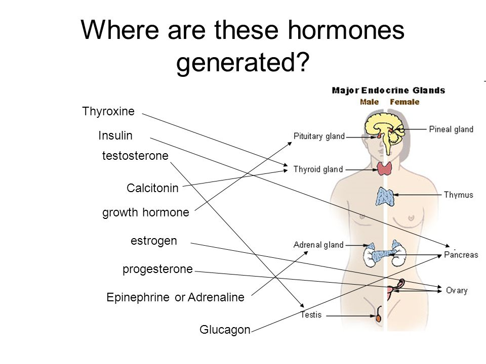 Where are these hormones generated.