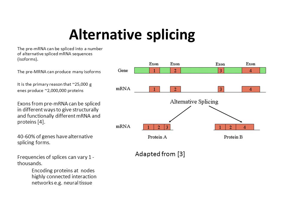 Alternative splicing The pre-mRNA can be spliced into a number of alternative spliced mRNA sequences (isoforms).