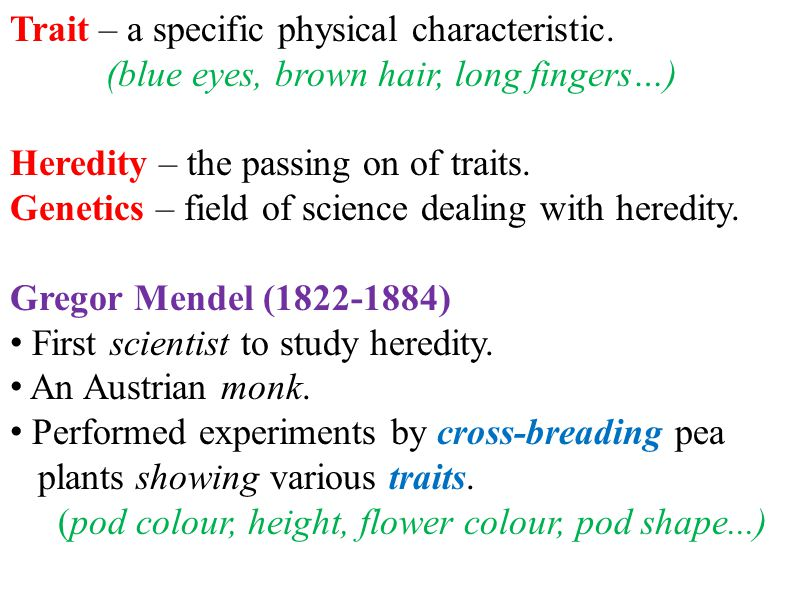 Mendel came up with the following hypotheses: Genes are passed from parent to offspring.