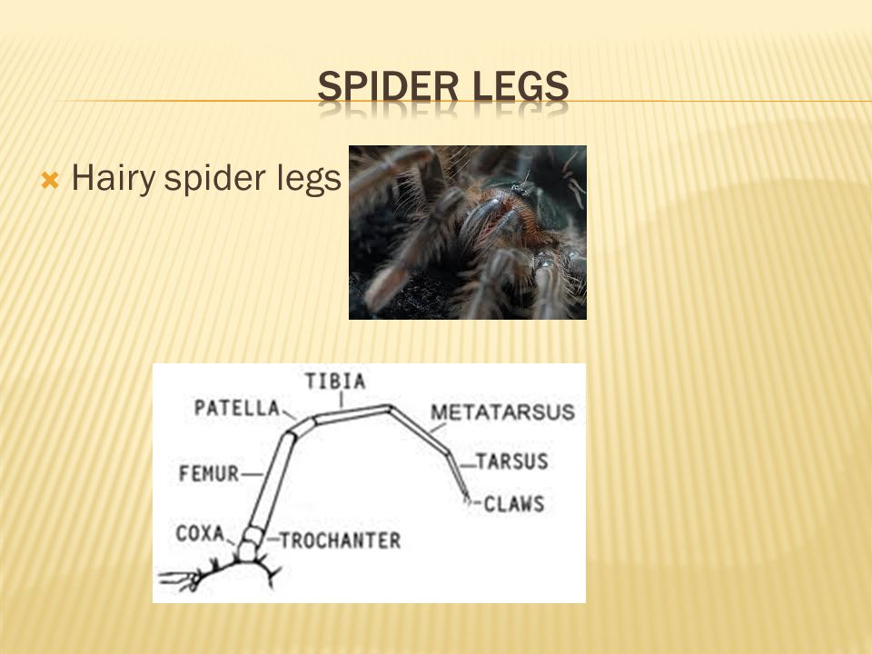  Hairy spider legs