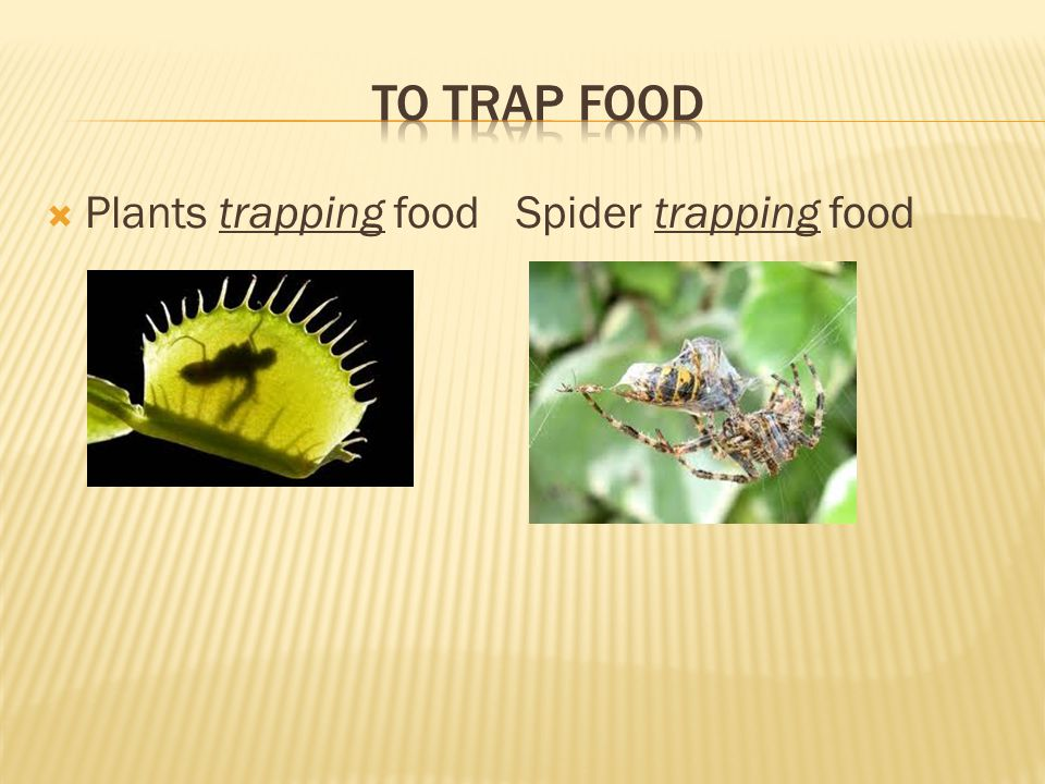  Plants trapping food Spider trapping food