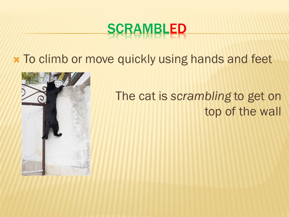  To climb or move quickly using hands and feet  The cat is scrambling to get on top of the wall